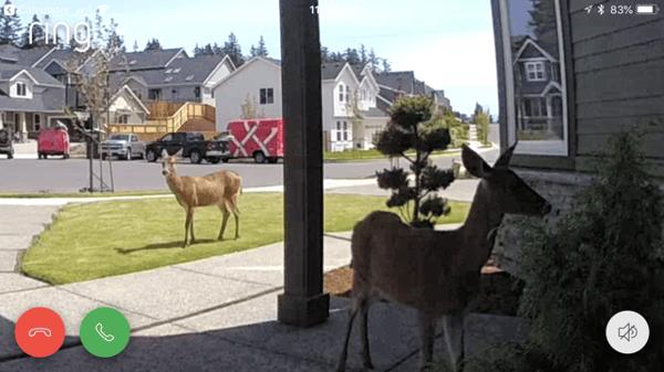 deer-in-hood