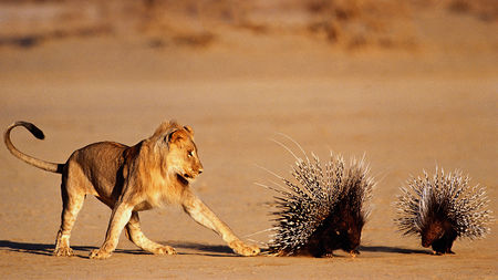 Security in the Wild: Threat Responses in the Animal Kingdom